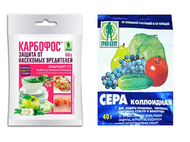 Крыжовник Белорусский сахарный защита от вредителей