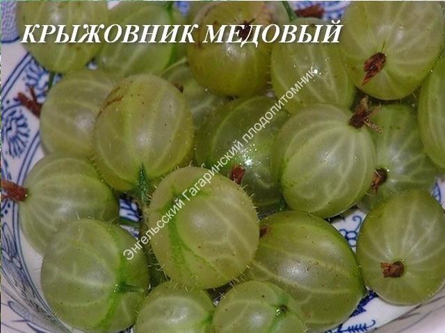 Плоды крыжовника Медовый