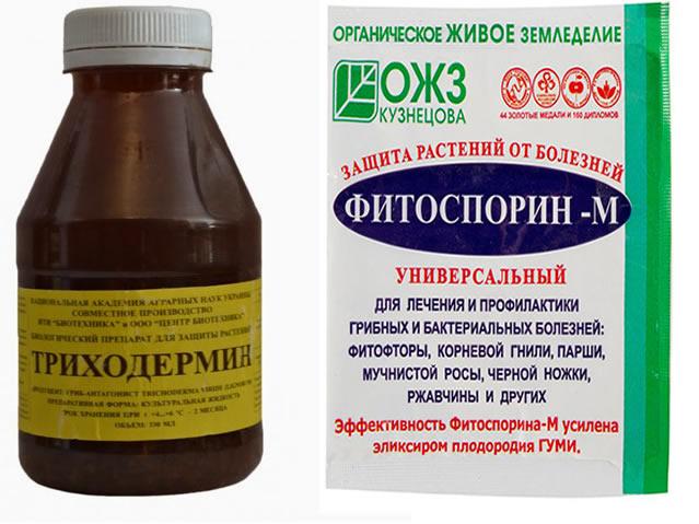 Триходермин и Фитоспорин-М для весенней обработки крыжовника