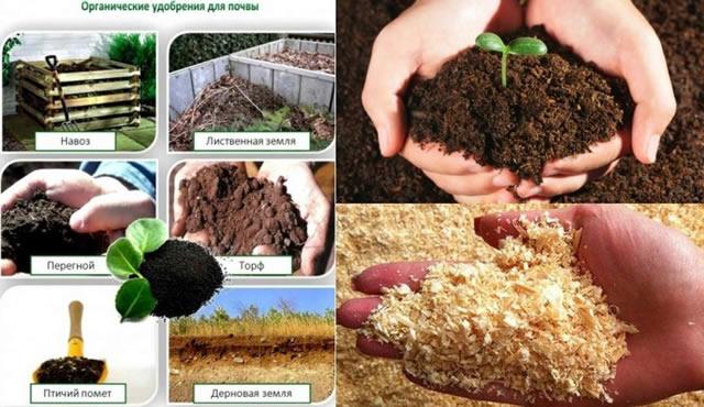 Органические удобрения для крыжовника